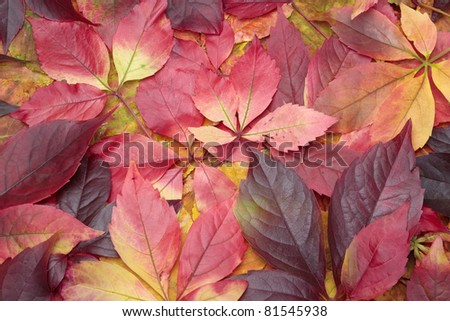 Pile of colorful autumn leaves background - stock photo