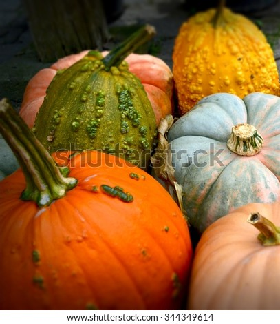 Pile of colorful pumpkins and gourds perfect for the picking! / Pile of Colorful Pumpkins and Gourds / Pile of colorful pumpkins and gourds. - stock photo