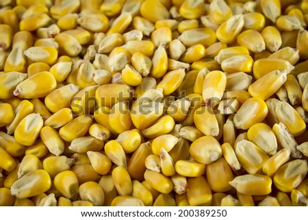 Pile of corn kernels. - stock photo