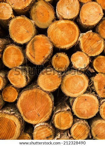 Pile of cut tree trunks with view of concentric year rings - stock photo