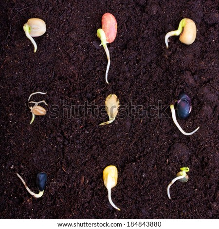 Pile of different seeds, beans  growing over soil. - stock photo