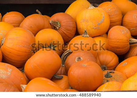 Pile of different size pumkins at a pumpkin pile on a local halloween fairground