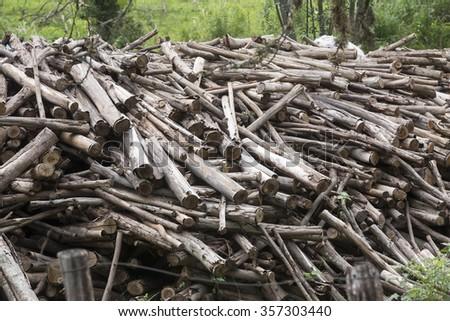 pile of eucalyptus logs in rural area in brazil - stock photo