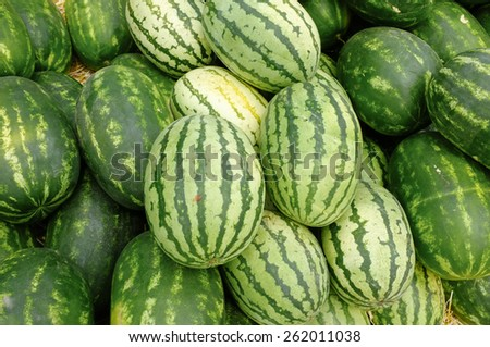 Pile of fresh and ripe watermelons in agricultural fair - stock photo