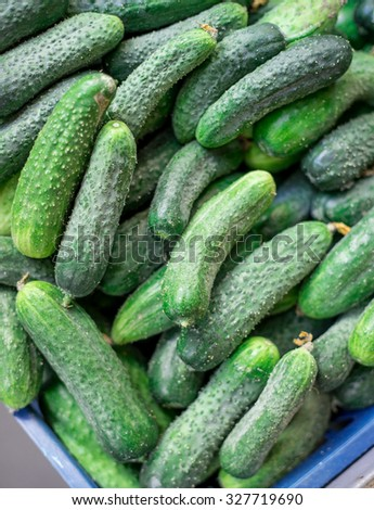 Pile of fresh green cucumbers / close-up. Selective focus.