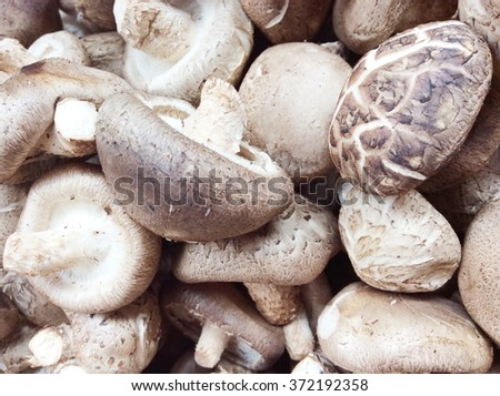 Pile of fresh mushrooms