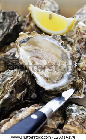 Pile of fresh oysters with an opened oyster, lemon quarter and oyster knife