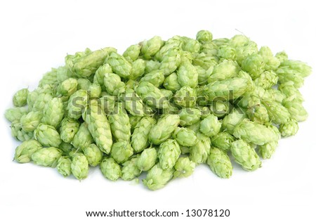 pile of hops - stock photo