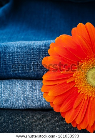 Pile of jeans of various shades and orange gerbera daisy  - stock photo