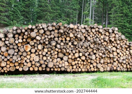 pile of logs cut by loggers in the mountains for the furniture industry 4 - stock photo