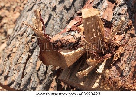 Pile of logs cut in a forest, Logs on the nature