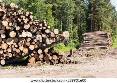 Pile of logs on meadow in forest - stock photo