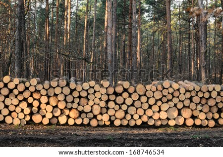 pile of lumber in pine forest - stock photo