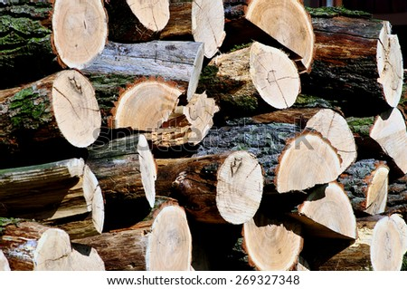 Pile of oak wood in the garden - stock photo