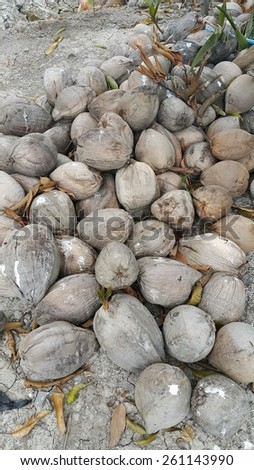 Pile of old coconuts on the ground - stock photo