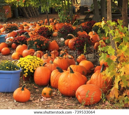 Pile of orange pumpkins with flowers on the ground