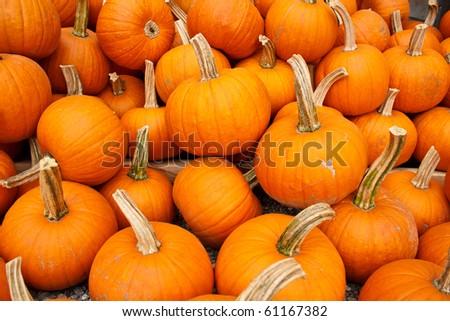 pile of organic pumpkins ready for sale