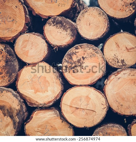 Pile of pine logs on meadow in forest - stock photo