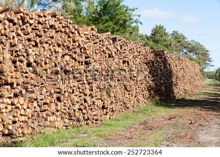 pile of pine tree trunks cut - stock photo