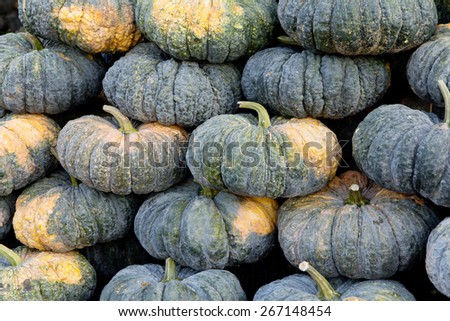 pile of pumpkin in market - stock photo
