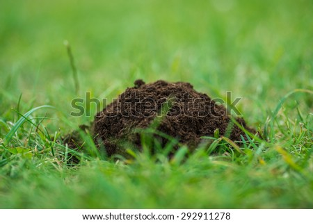 Pile of pure ecological soil on the fresh green grass - stock photo