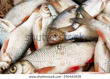 Pile of roaches and other fish, close-up - stock photo