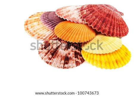 Pile of sea scallops, isolated on white.