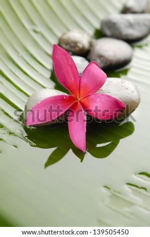 Pile of stones with red frangipani on banana leaf - stock photo