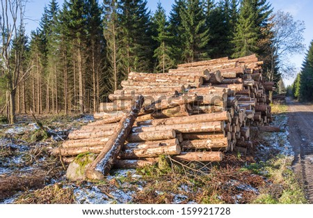 Pile of timber of the woods at a clearcut - stock photo