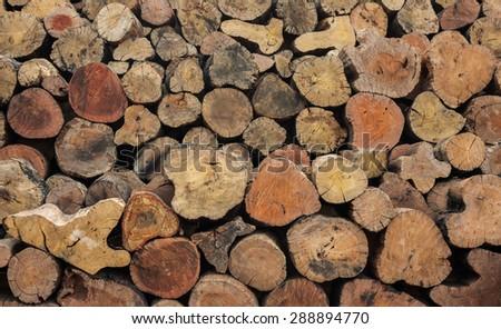 Pile of tree stumps - stock photo