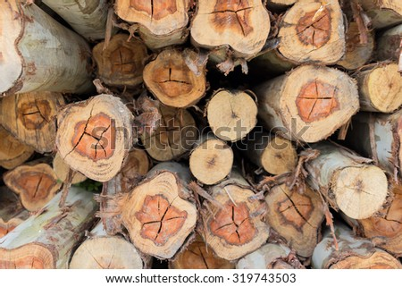 Pile of tree trunks cut
