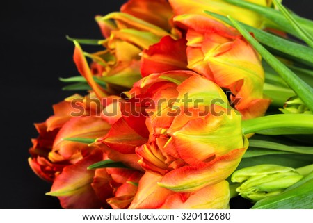 Pile of vibrant orange and yellow fresh cut parrot tulips with dark background.