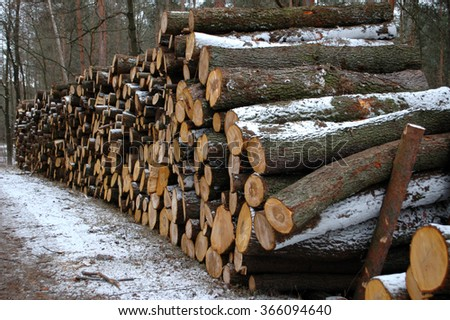 Pile of wood in the forest