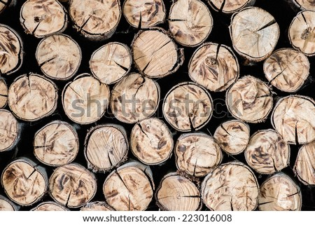 Pile of wood logs Background - stock photo
