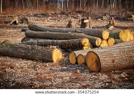 Pile of wood logs useful as background.                           - stock photo