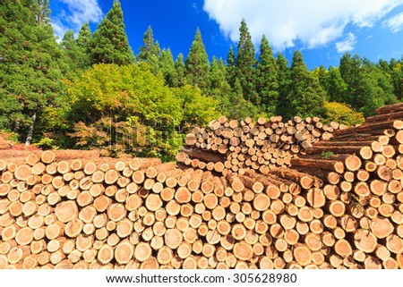 Pile of Wooden Logs with Pine Forest as background. - stock photo