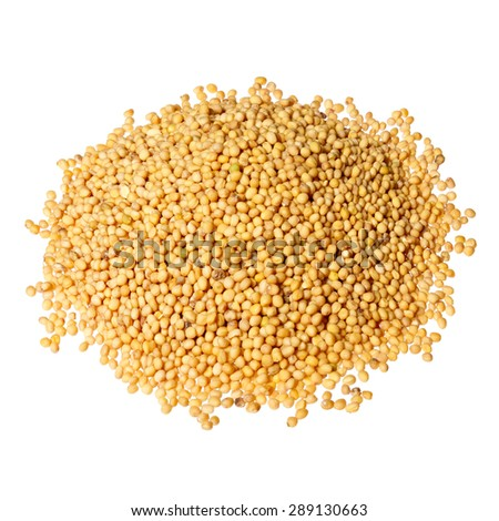 Pile of yellow mustard seeds isolated.