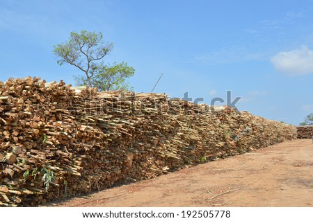 pile up of eucalyptus trees collected for paper industry - stock photo