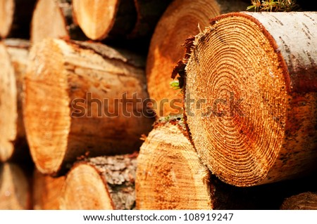 piled tree trunks close up