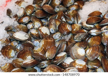 Piles of golden clams on ice in a seafood market - stock photo