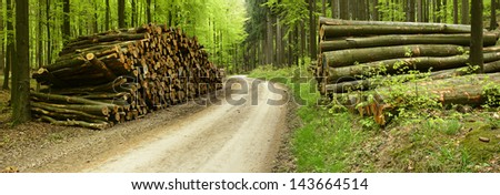 Piles of Lumber along Small Road trough Mixed Forest, panorama made from 2 D800 images - stock photo