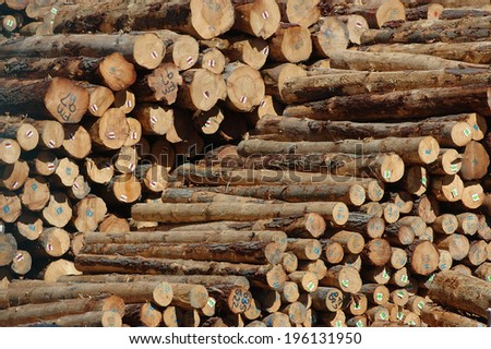 Piles of Pinus radiata logs for export at Port of Lyttleton, South Island, New Zealand - stock photo