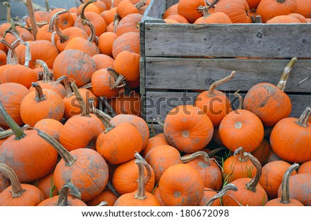 Piles of pumpkins on the farm