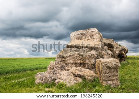 Piles of straw in the fields - stock photo