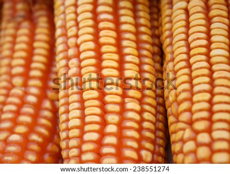 piles of sweet corn, material for corn starch - stock photo