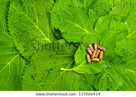 Pills over green leaves. Homeopathic medicine. Healthy vitamins - stock photo