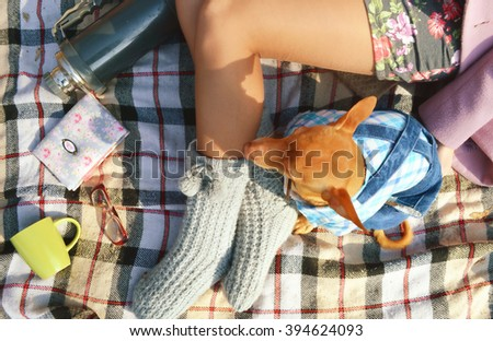 pincher dog in clothes. non-allergic dog Zwergpinscher.dog resting in the park.Girl with a small dog in a park having a picnic