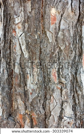 pine bark background - stock photo