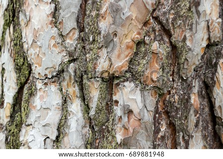 pine bark photo, tree bark texture, macro photo, forest tree skin