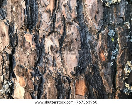 pine bark texture background